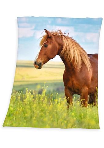 Herding Young Collection Kinderdecke »Pferd«, mit Motiv kaufen