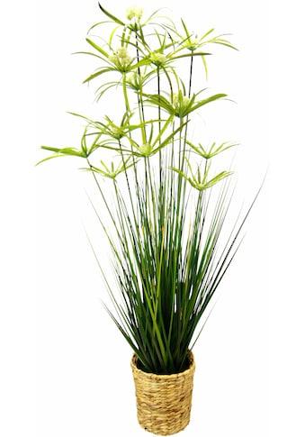 I.GE.A. Kunstpflanze »Zyperngras in Wasserhyazinthentopf« (1 Stück) kaufen