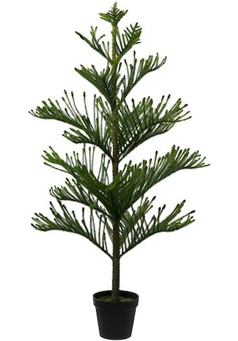 Creativ green Kunstpflanze »Araucarienbaum« (1 Stück) kaufen
