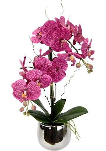 I.GE.A. Kunstpflanze »Phalaenopsis im Topf« (1 Stück) kaufen