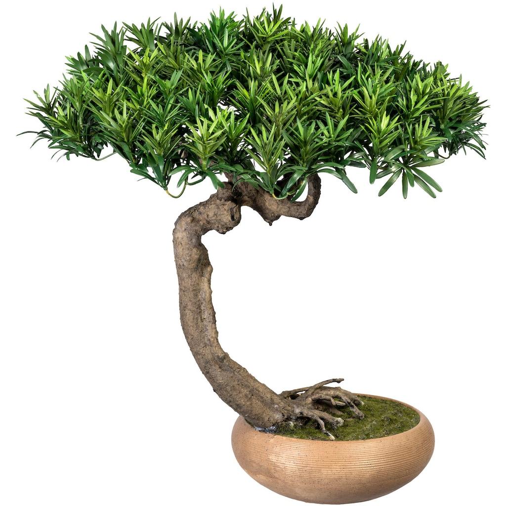 Creativ green Kunstbonsai »Bonsai Podocarpus Shankan«, in Keramikschale