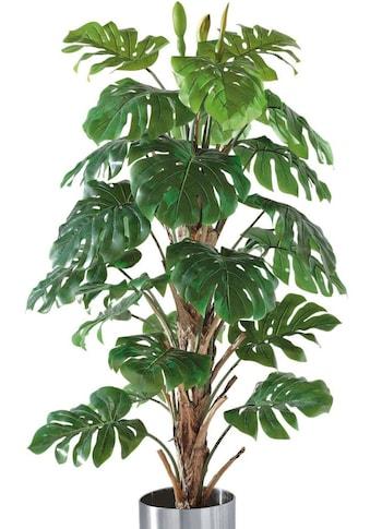 Schneider Kunstpflanze »Philo - Baum« kaufen