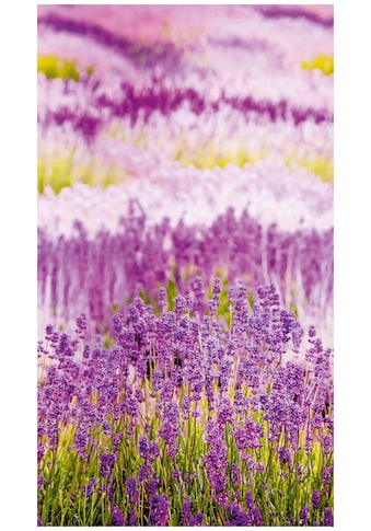 BODENMEISTER Fototapete »Lavendel Provence lila«, Rolle 2,80x1,59m kaufen