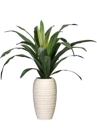 Creativ green Künstliche Zimmerpflanze »Dracaena«, in Keramikvase kaufen