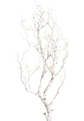 Botanic-Haus Kunstzweig »Deko-Ast« kaufen