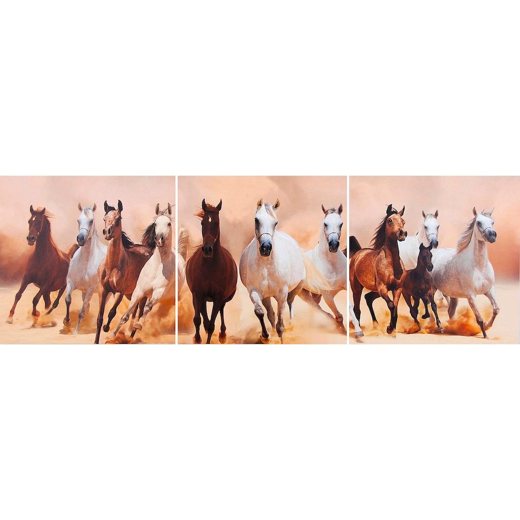 my home Kunstdruck »Pferde«, (Set, 3 St.)
