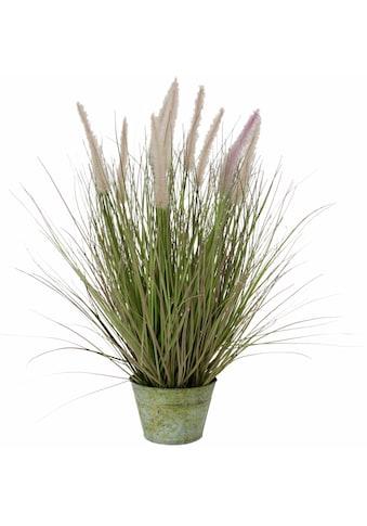 I.GE.A. Kunstpflanze »Fuchsschwanzgras« kaufen