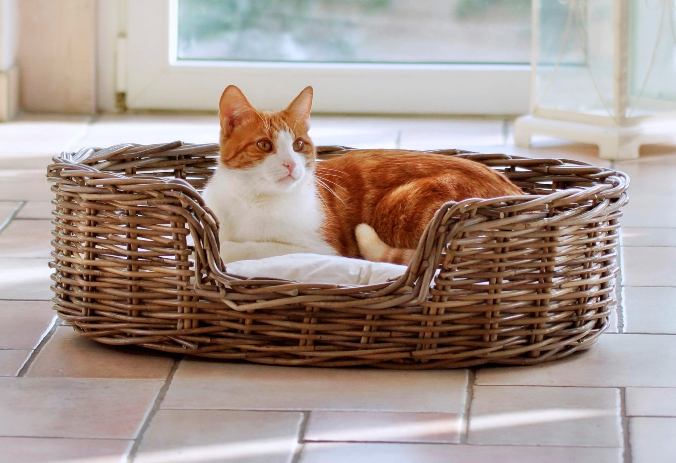 SILVIO DESIGN Hundekorb und Katzenkorb »Rattan« | Garten > Tiermöbel > Katzenkörbe | Braun | SILVIO DESIGN